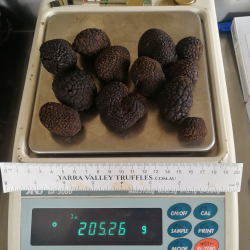A pack is ONE or TWO truffles